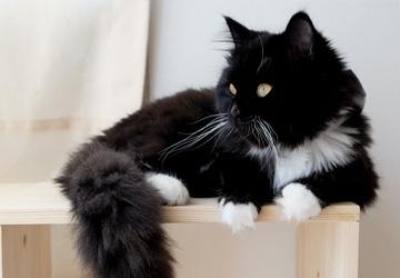 Kattepensionen